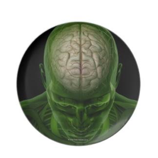 brain_arteries_dinner_plate-r19d5f7bf8ad74e8780734bf93bf55f44_ambb0_8byvr_324.jpg