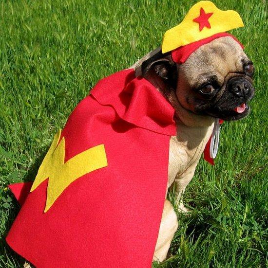 Wonder-Pup.jpg