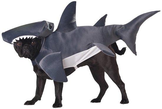 Shark-Pup.jpg